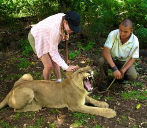 woman petting a lion in Mauritius