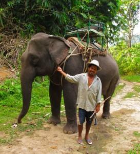 My mahout, Leim