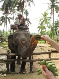 What do you feed a 6,500 elephant? Whatever it wants (but mostly bananas).