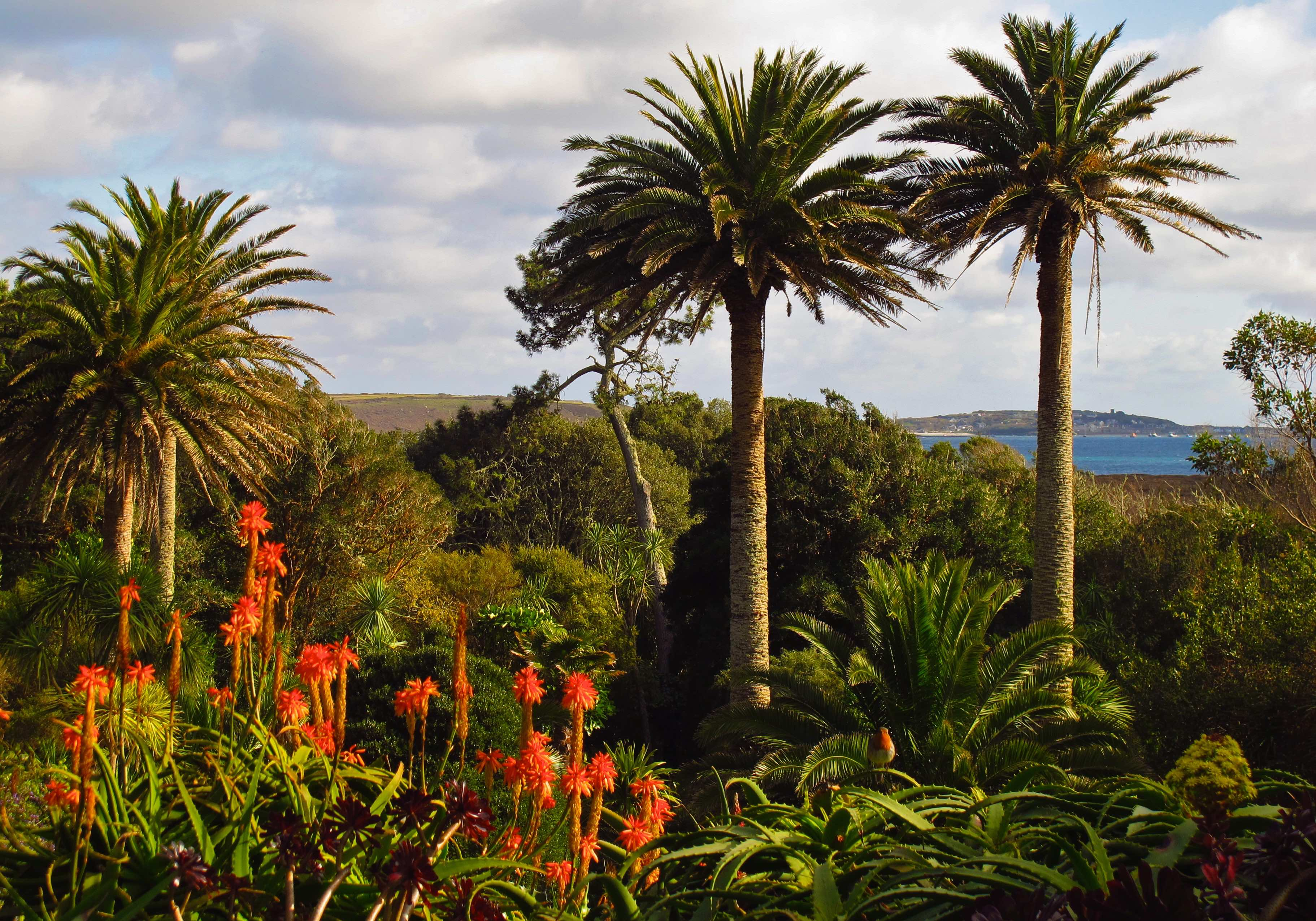Scilly escape the land that crime forgot in cornwall for Garden trees england