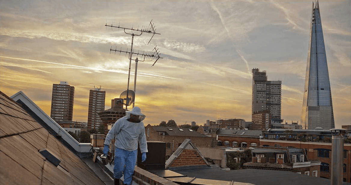 Dale Gibson, beekeeper of Bermondsey Street Bees, on a rooftop with a backdrop of the London skyline