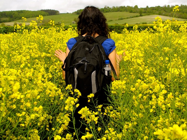 woman in field of rapeseed