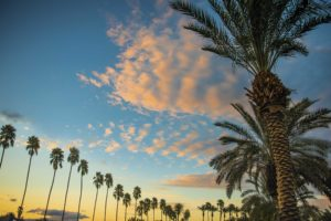 palm trees at sunset. Photo Courtesy of Greater Palm Springs CVB