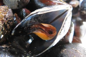Fresh mussels are on the menu at Mirador de La Badia in Ampolla, Catalunya, Spain. Copyright Amy Laughinghouse